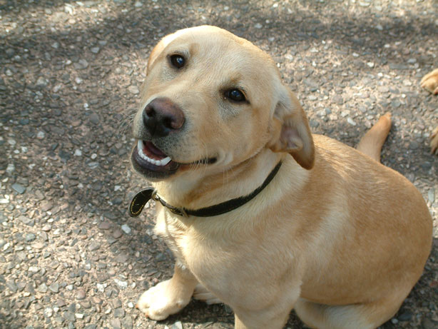 Friendly Dogs Related Keywords & Suggestions - Friendly ...