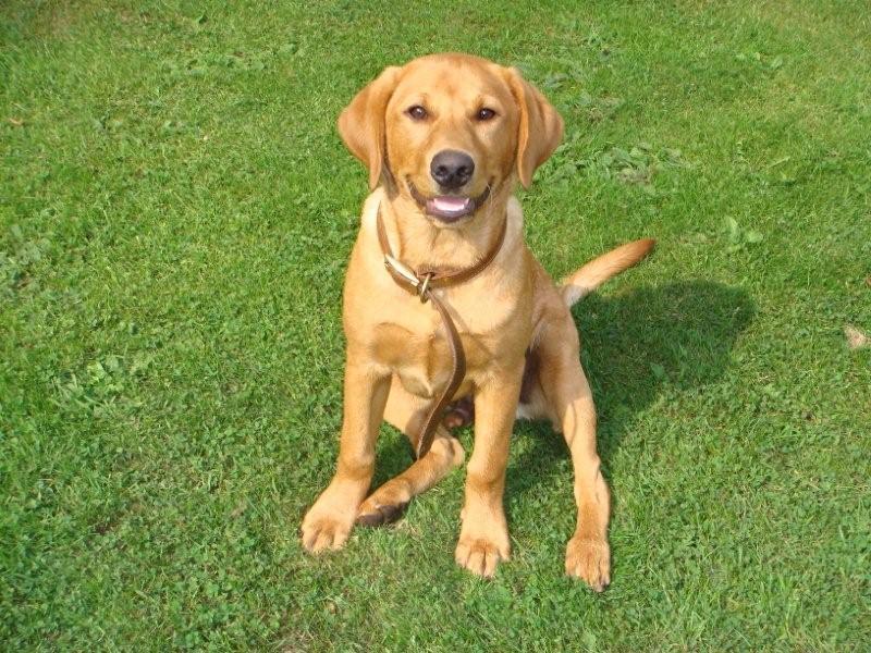 Dog Friendly Self Catering Devon